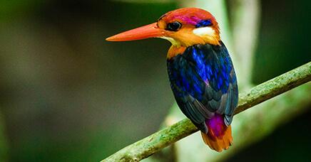 Wildlife & Birding
